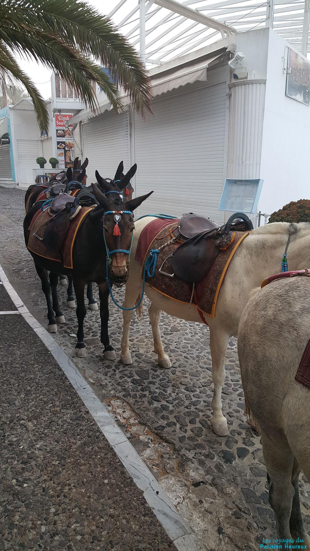 Les ânes à Fira, Santorin