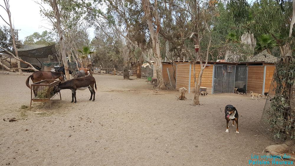 Le refuge pour animaux de Santoin