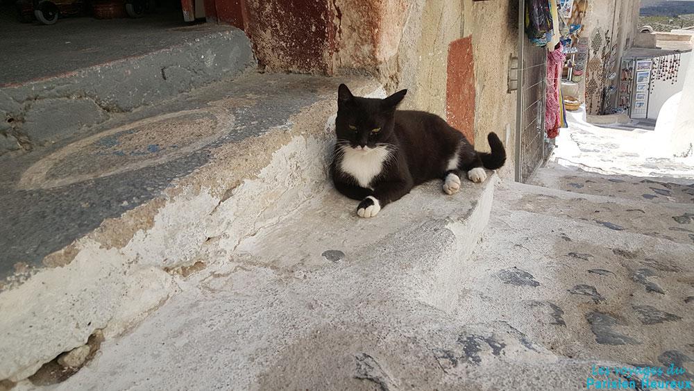 Chat à Santorin