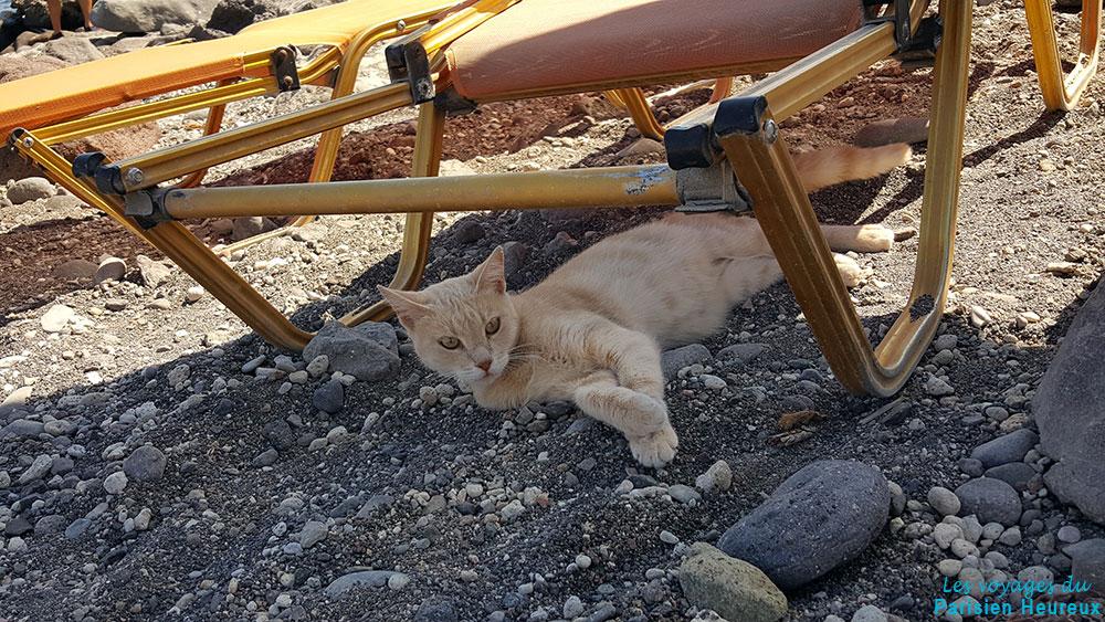 Mes rencontres animali res santorin le parisien for Santorin sejour complet