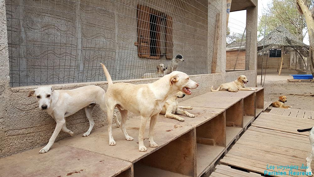 Les chiens du refuge de Santorin