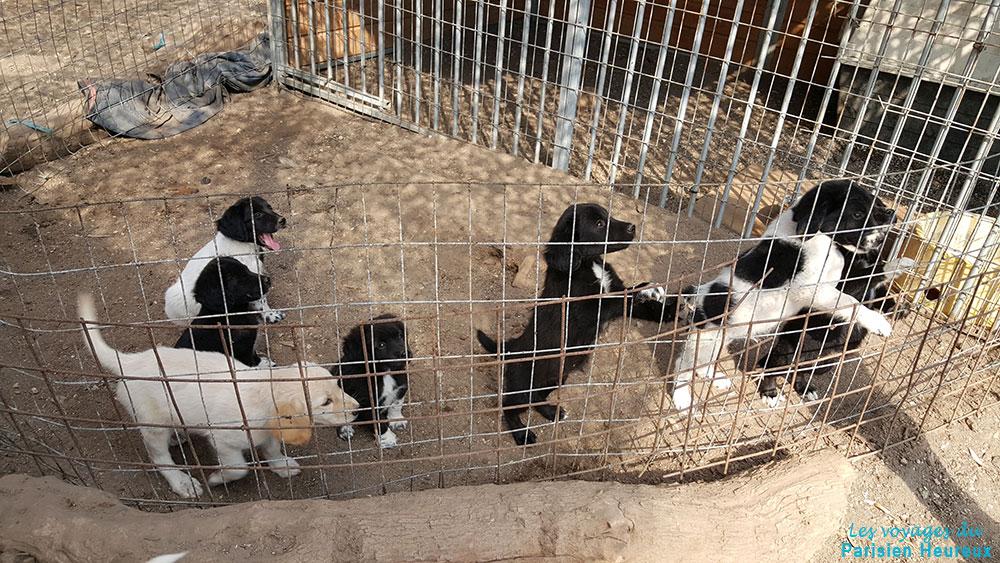 Le refuge pour animaux de santorin sawa le parisien for Santorin sejour complet