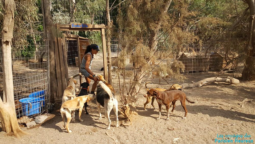 Christina, la présidente du refuge SAWA pour animaux à Santorin