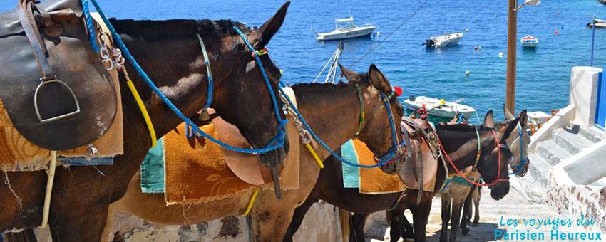 Les ânes de Santorin