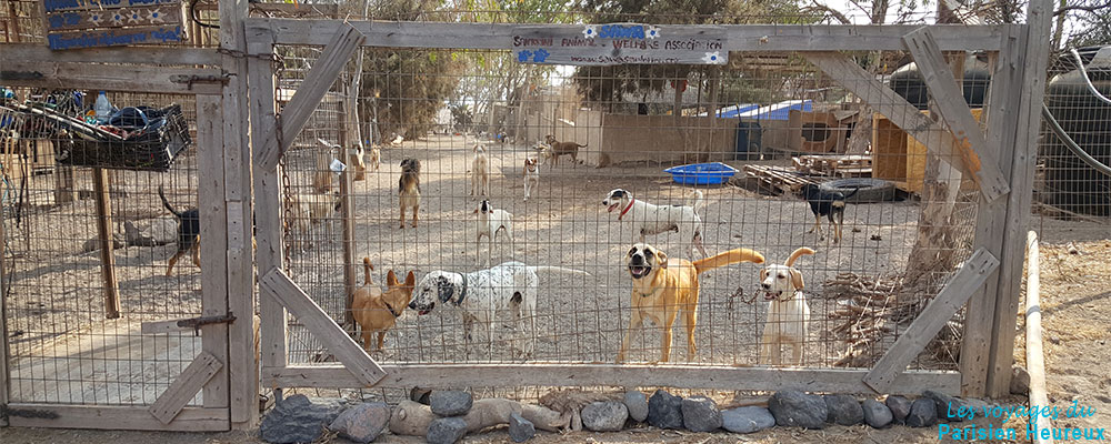 Le refuge pour les animaux de Santorin