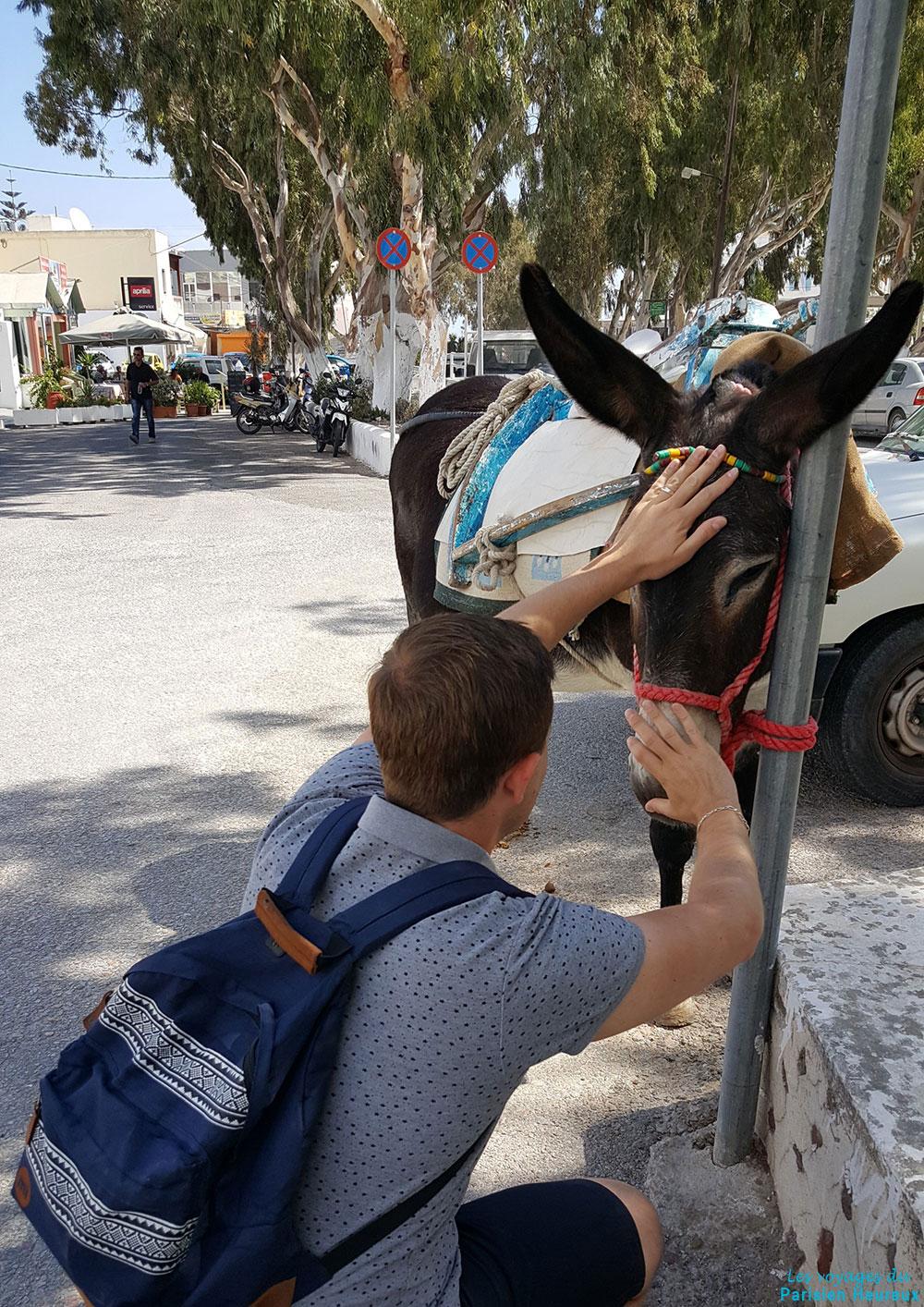 Jolie rencontre avec cet âne à Santorin