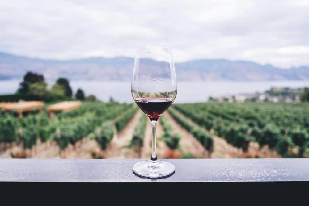 Dégustation du vin de Paros